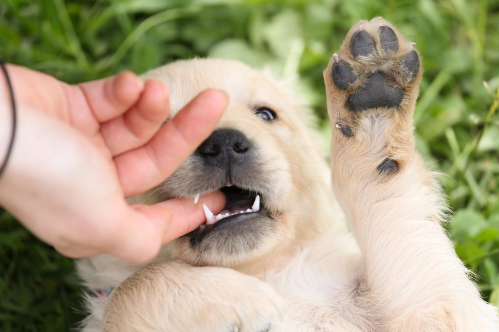 кусачая собака