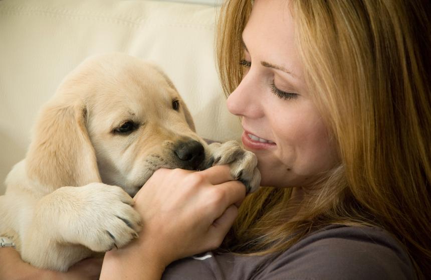щенок кусает собаку