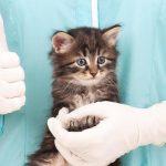 Как подготовить животное к операции