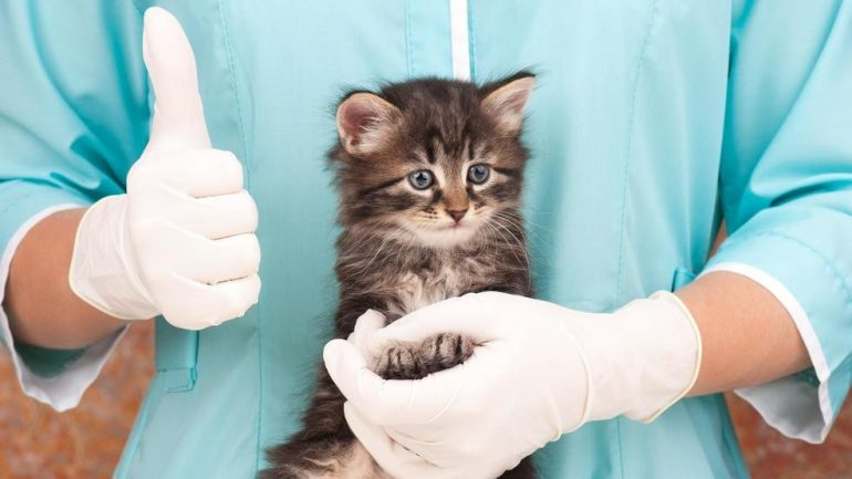 Котёнок и доктор