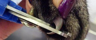 подстригание когтей у кошек
