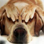 Если ваша собака очень пугливая