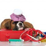 Оказание неотложной доврачебной помощи собаке при отравлениях и травмах