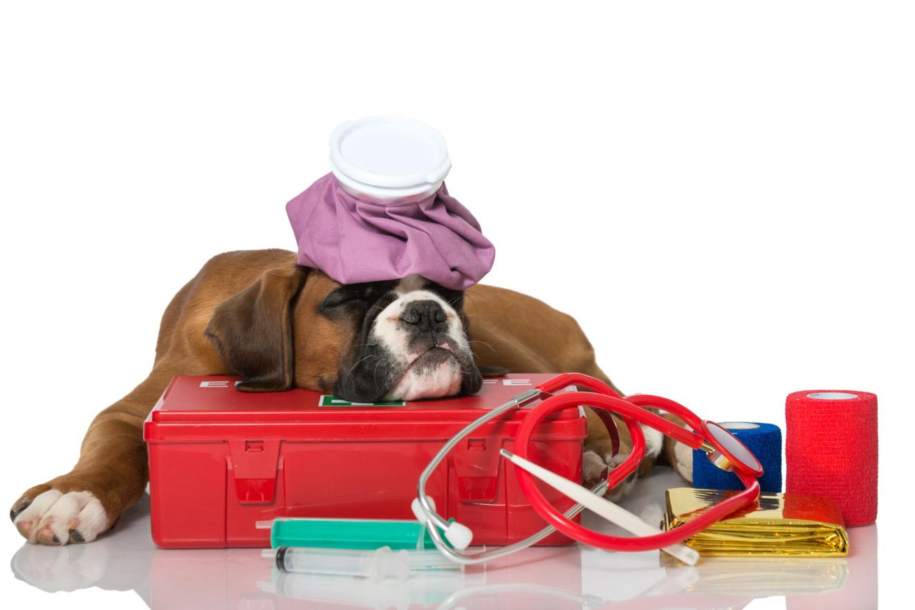 Собака с аптечкой