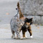Чем опасен самовыгул для котов и кошек