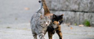 Кошки на улице
