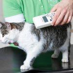 Что такое чипирование котов и для чего это нужно?