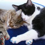 Кошачьи антицарапки, их особенности, правила применения