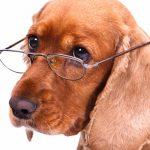 Особенности содержания возрастной собаки
