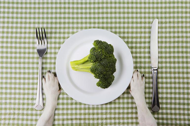 Овощи и собака