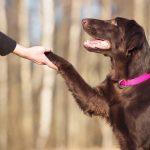 Как правильно дрессировать собаку самому