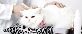 Кошку причёсывают