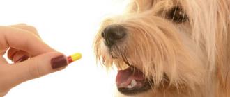 Собака и таблетка