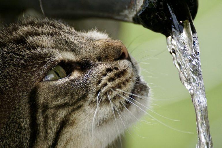 Кошка и вода