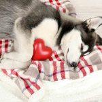 Сердечная аритмия у собак, её причины, диагностика и лечение