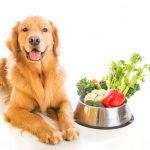 Как защитить собаку от авитаминоза и гиповитаминоза?