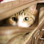Как перевозить кота в общественном транспорте?