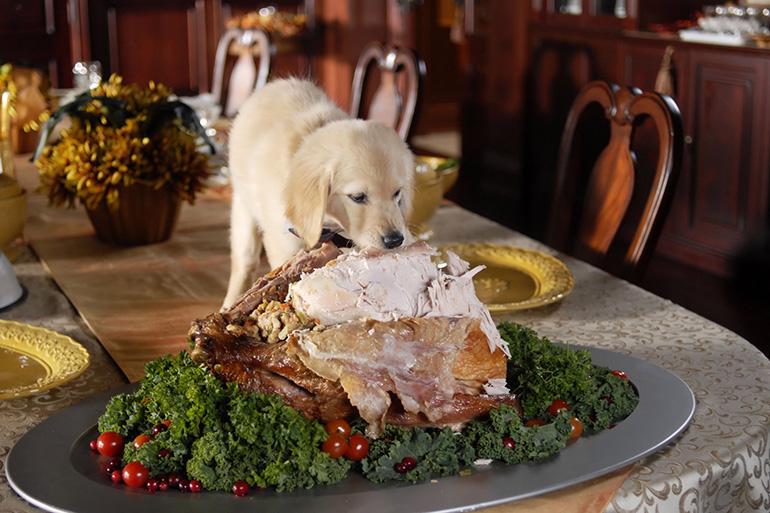 Собака и еда со стола
