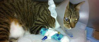 Кот после операции