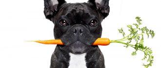 Собака с морковью