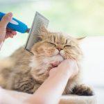 Вычёсывание — уход за шерстью кошки