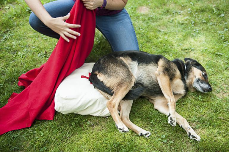Оказание помощи собаке