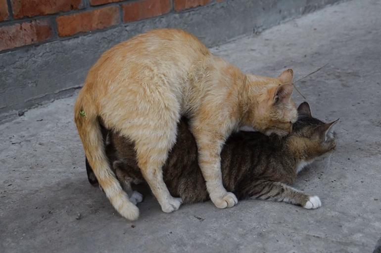Кот и кошка вместе