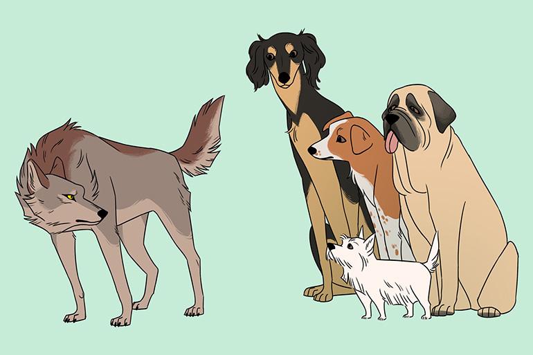 Собаки и волк