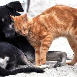 Породы собак, которые любят кошек
