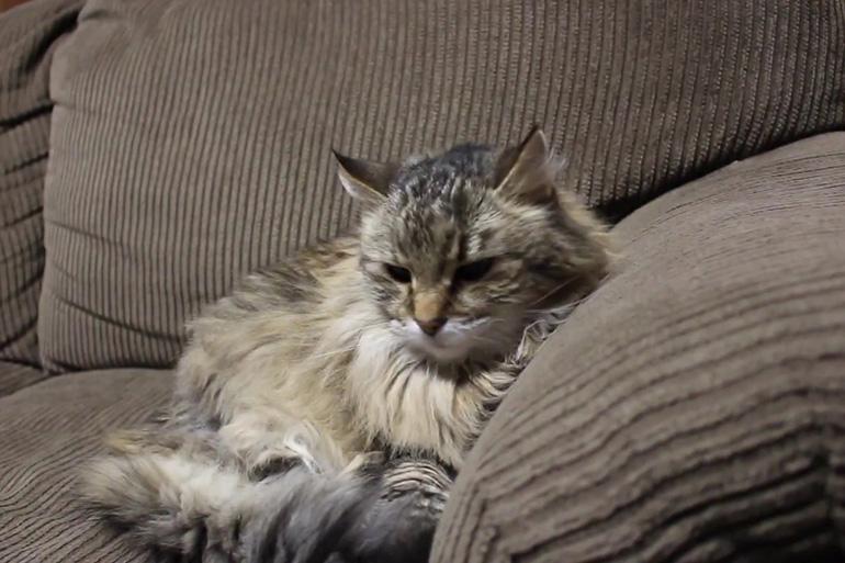 Кошка в возрасте