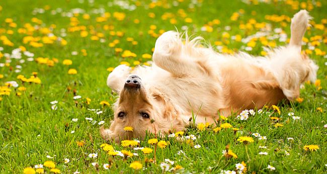 Собака на травке