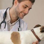 Паразитарные болезни собак