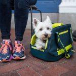 Как выбрать переноску для маленьких собак