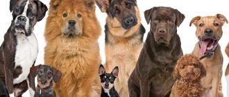 Племенные собаки