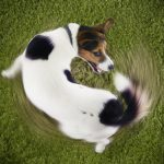 Гиперактивность собак. Причины и коррекция