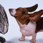 Как помочь животному пережить жару