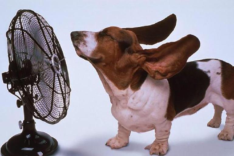 Собака и вентилятор
