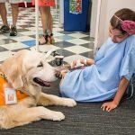 Собакотерапия. Как собаки лечат людей?