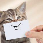 Как сделать кошку счастливой?