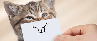 Кошка с улыбкой