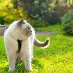 Нужно ли гулять с кошкой?