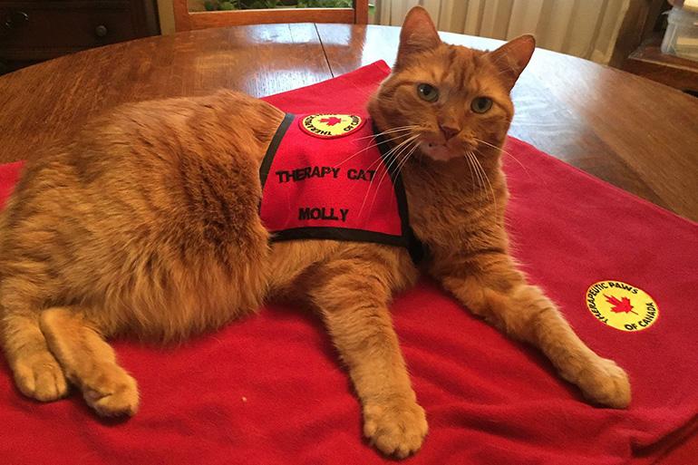Кот на службе в больнице