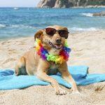 С собакой на пляж: правила и рекомендации
