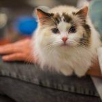 Виды паразитов у кошек, эффективные способы борьбы