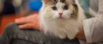 Кошка в очереди к врачу