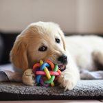 Как выбрать игрушки для щенка и как играть с ним