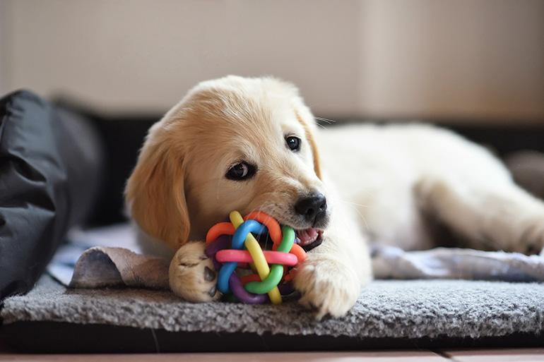 Щенок с игрушкой
