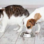 Можно ли включать в рацион собаки кошачьи корма?