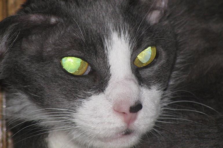 Глаза кошки светятся в темноте