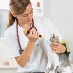 Распространённые болезни нервной системы у кошек, их лечение